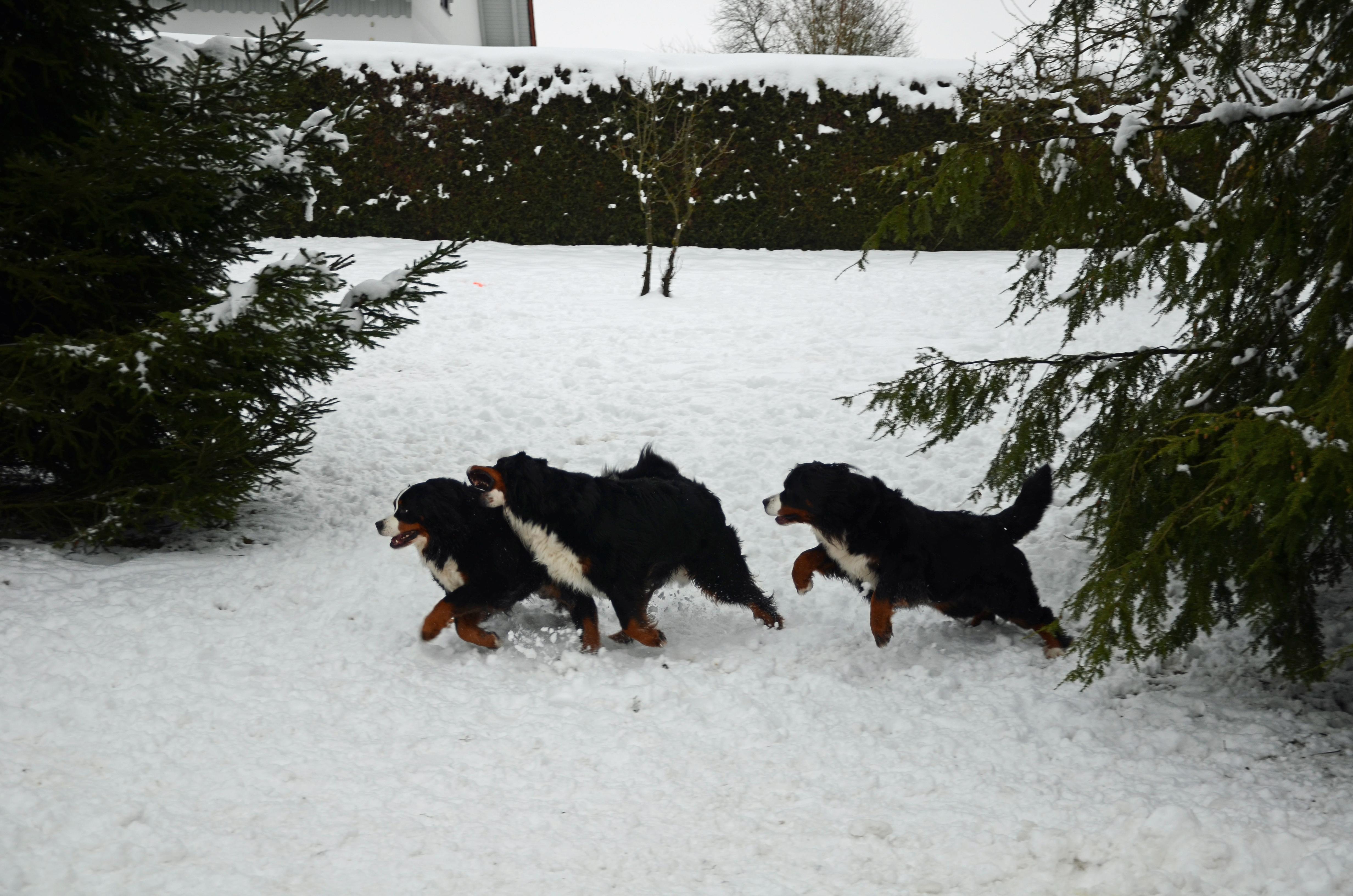 Vorm Haus im Schnee
