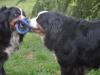 Lilli und Bacio