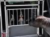 tierischer Besuch